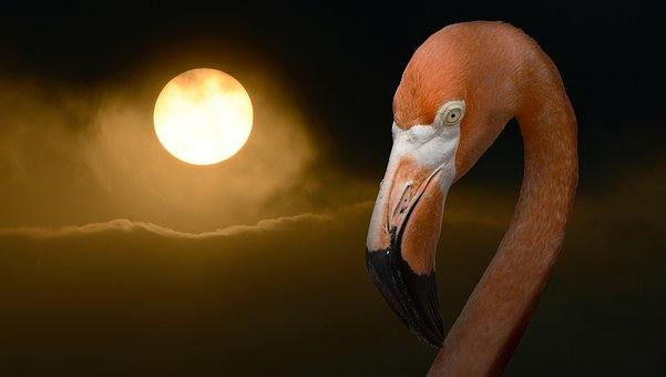 flamingo in the smog